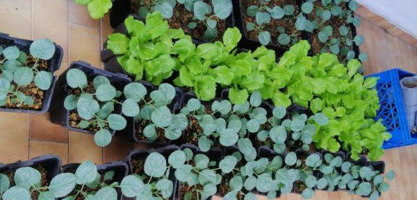 Pre-Grown Farming Set 10
