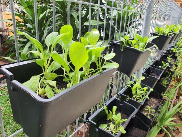Pre-Grown Farming Set 11