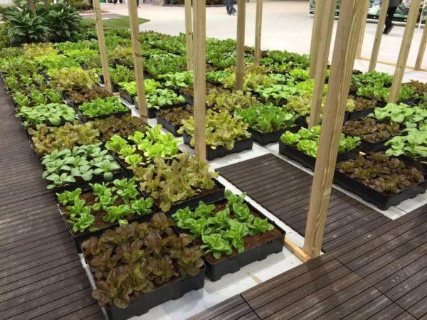 Pre-Grown Farming Set 2
